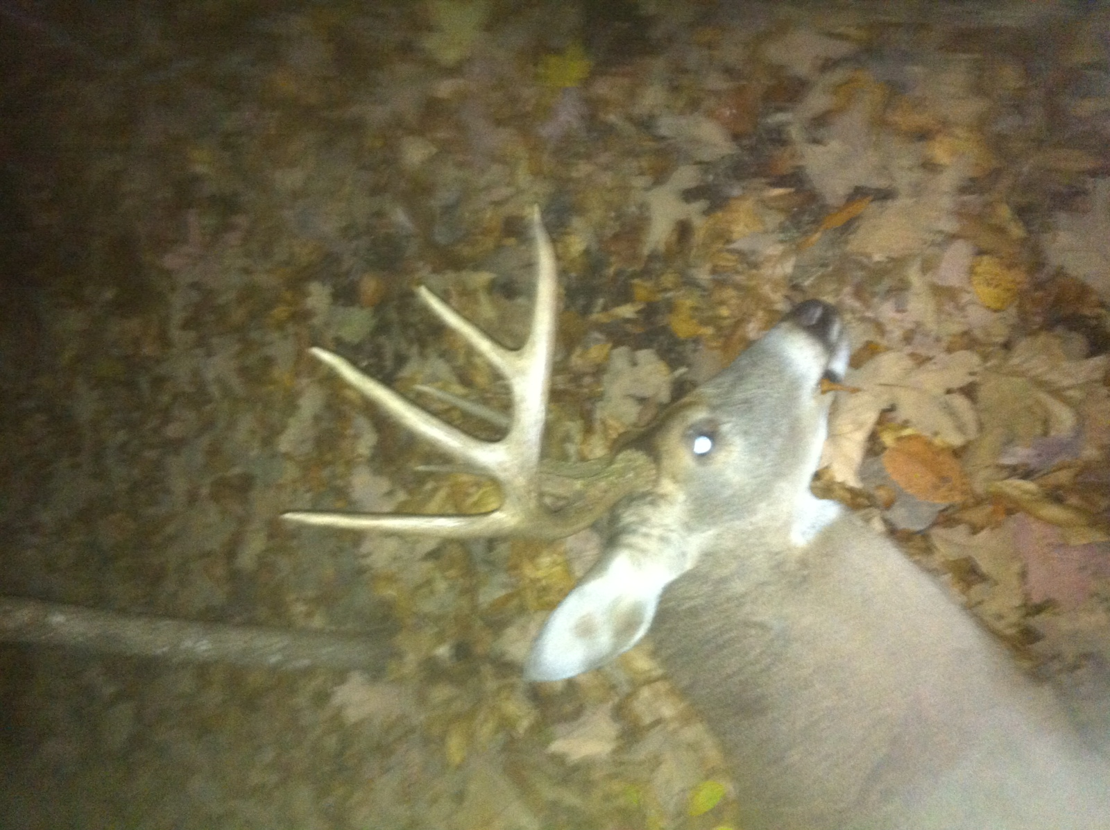 Kenneth 10pt Land Between the Lakes